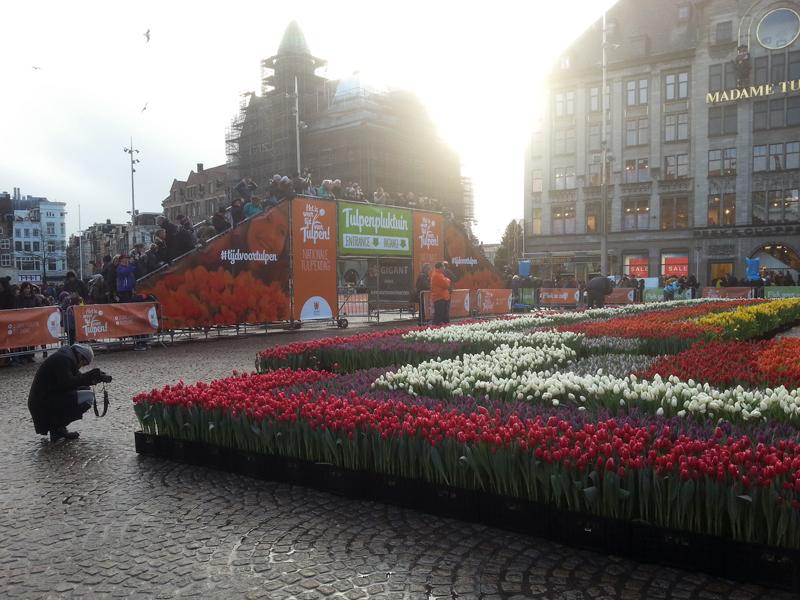 TulipsDamSquare2