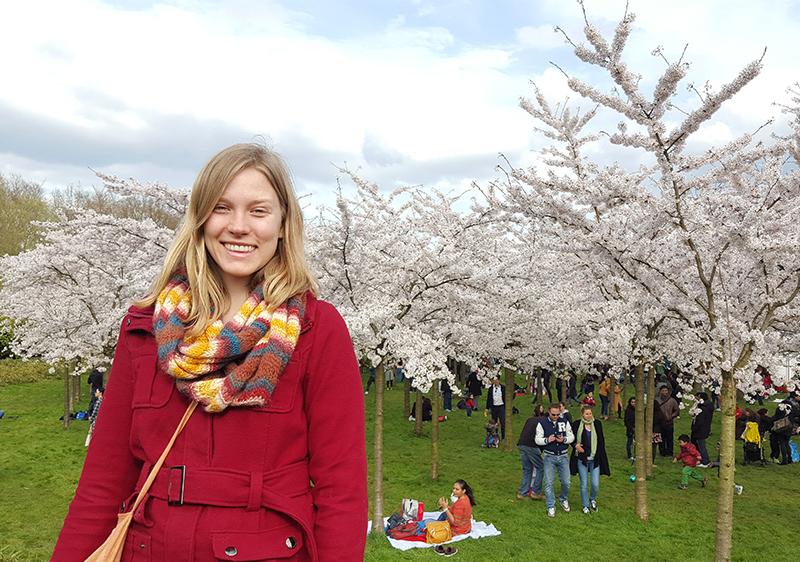 CherryBlossoms_liten